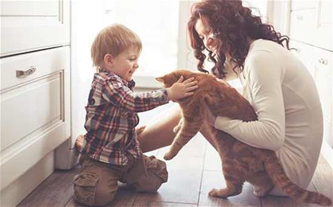 Mom and son play with cat at home